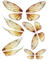 OOAK Artist Emporium Fairy Wing Prints Wings