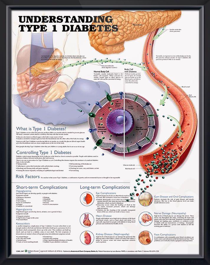 maladie cardiovasculaire prevención de diabetes