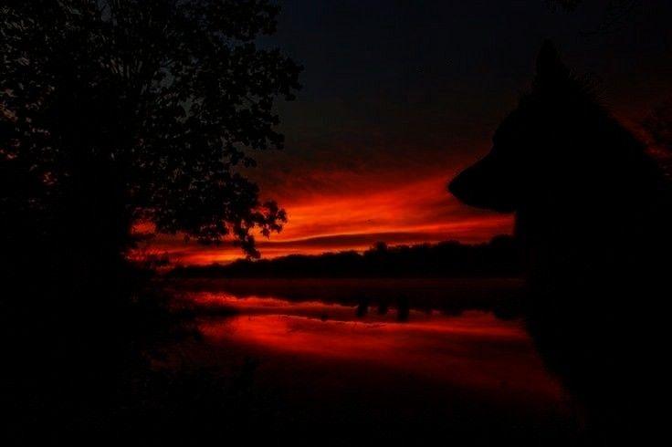- sunsets and sunrises -Deutscher Schäferhund Sunrise von Kristin Castenschiold auf 500px   - su
