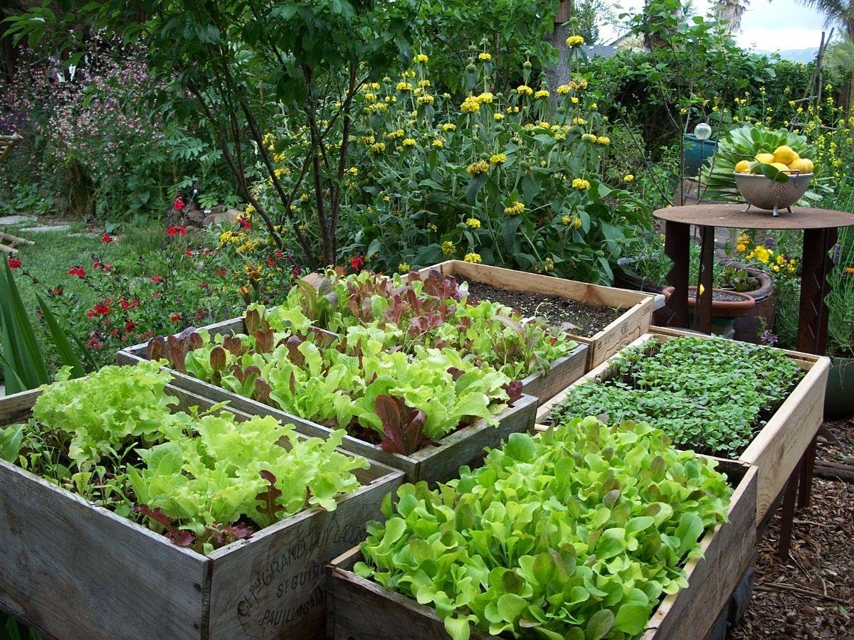 Herb Garden Design Examples edible landscapes | organic gardening, edible garden and gardens