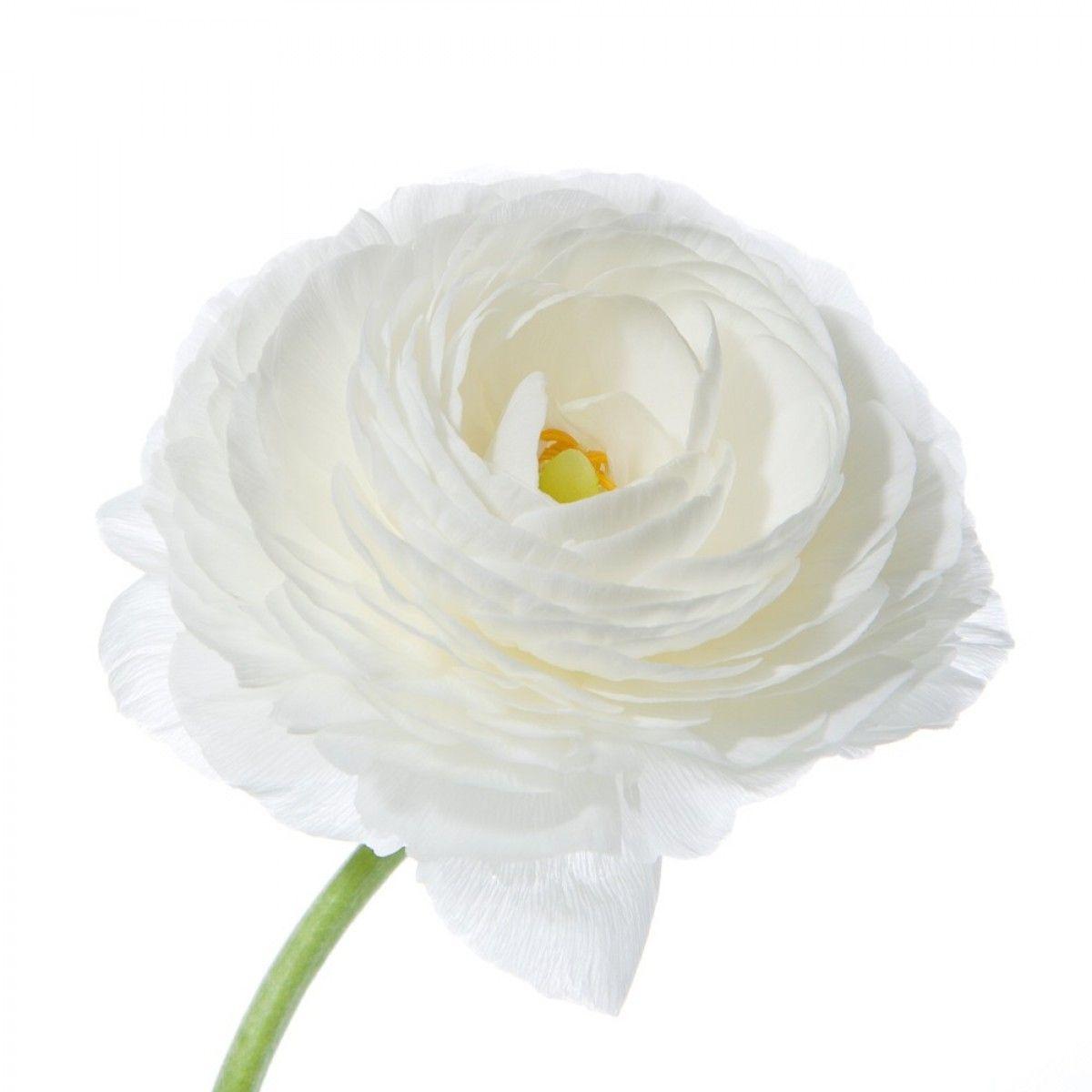 Might Not Be In Season White Ranunculus My Best Friends Wedding