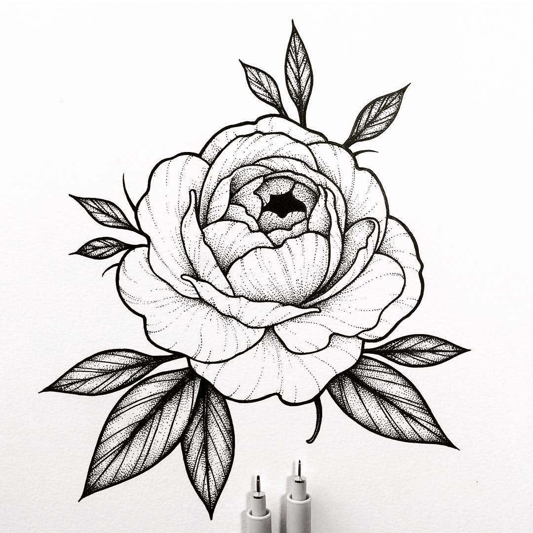 Aucune Description De Photo Disponible Dessin Pivoine Dessin Tattoo Art Dessin
