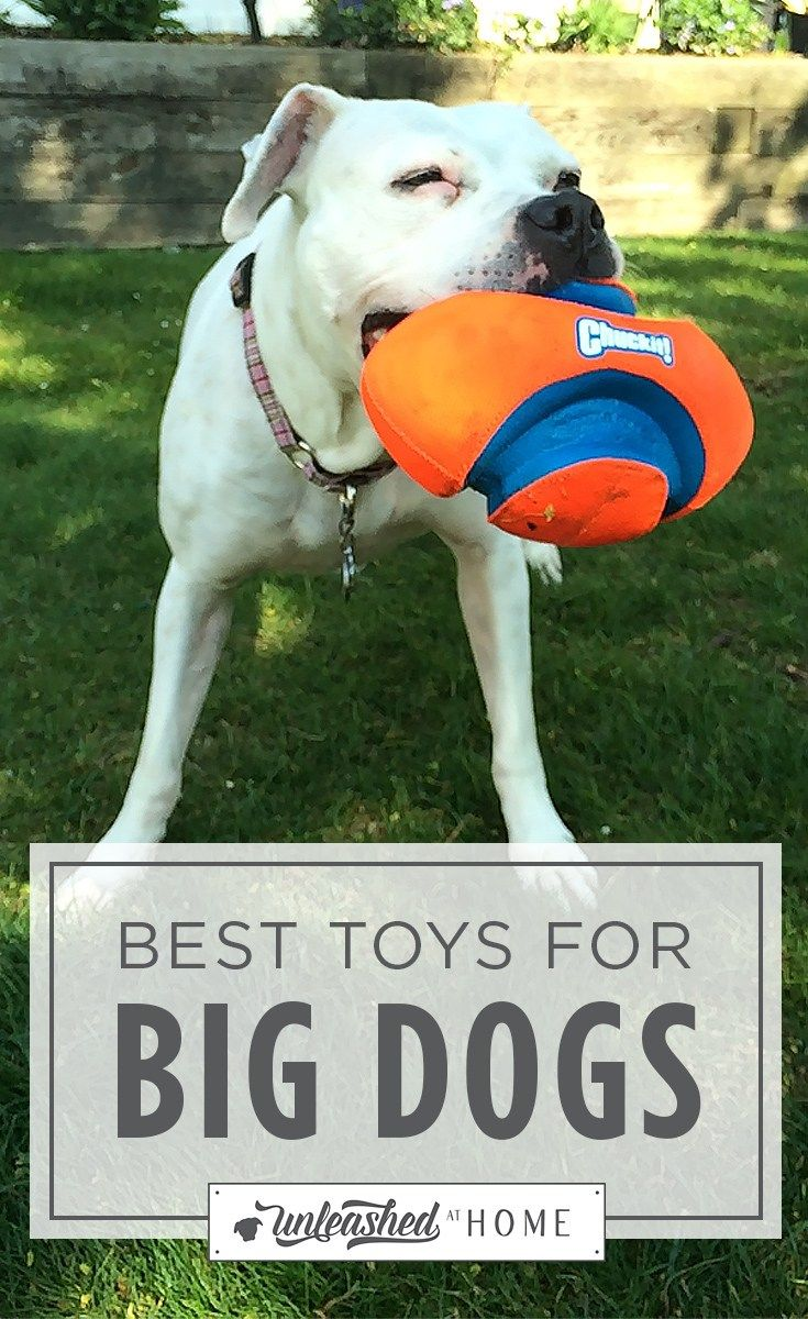 Best Toys For Big Dogs Big Dog Toys Best Dog Toys Outdoor Dog Toys