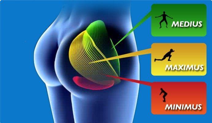 Po Typen Anatomie - So sind deine Popo Muskeln aufgebaut | Pinterest ...
