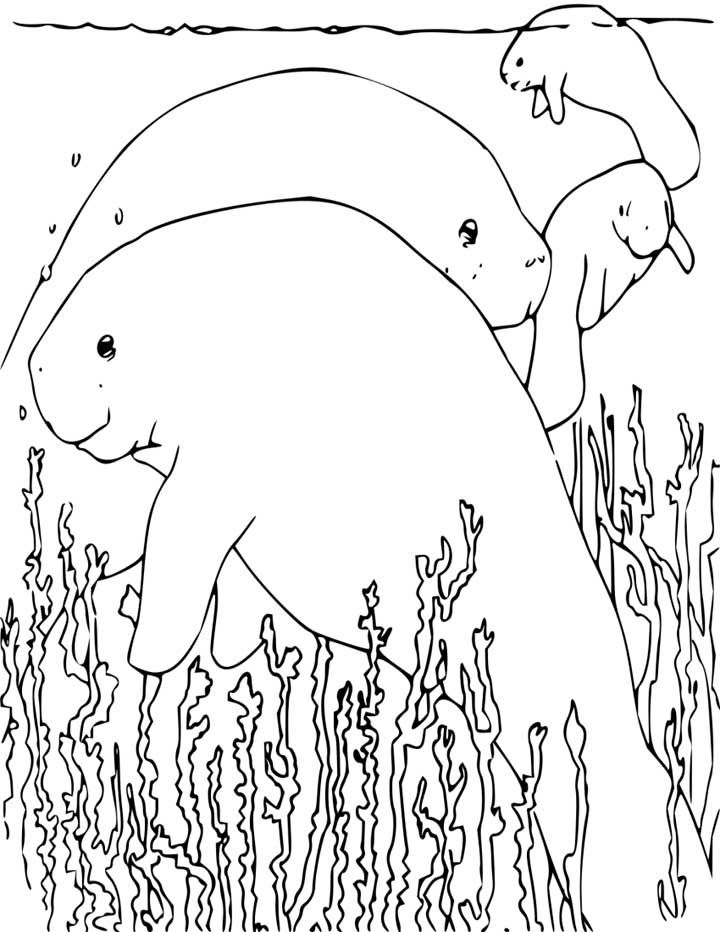 Manatee Coloring Page Manatee Coloring Pages Animal Coloring Pages