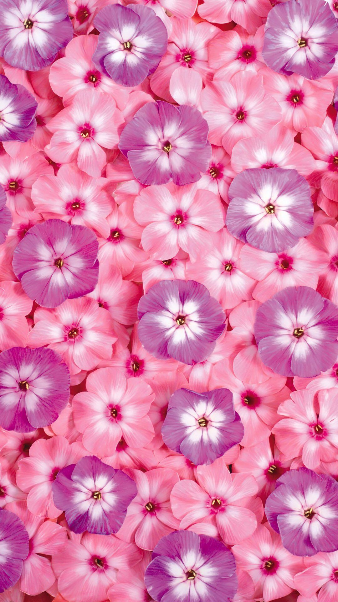 Pink Petal Flower Lilac Purple Plant Flower Iphone Wallpaper Flower Phone Wallpaper Flower Wallpaper