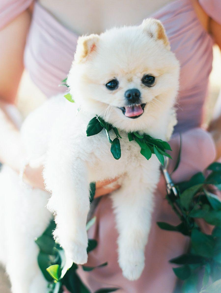 Destination Weddings Beautiful Traditions We Live For This Wedding Pets Dog Bridesmaid Dog Wedding