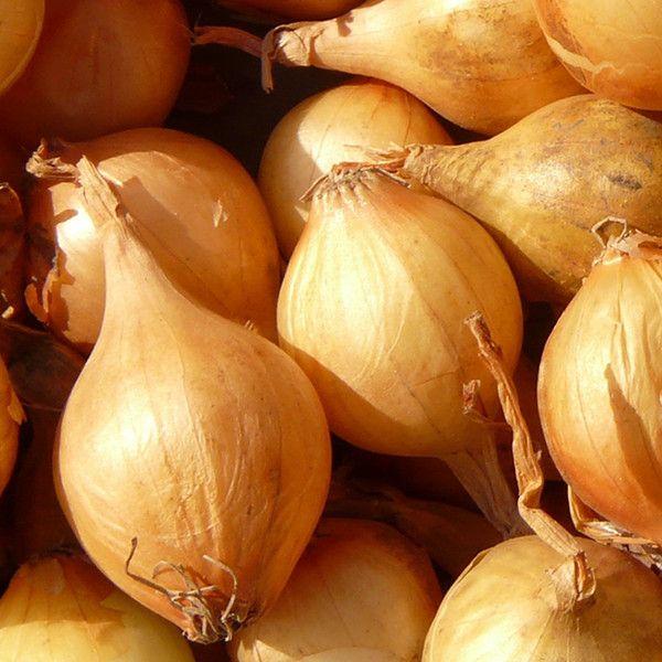Planter l'ail, l'échalote et l'oignon | Oignon, Jardin ...