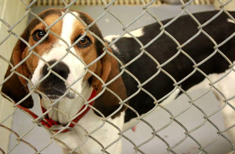 16++ Cumberland county animal shelter images
