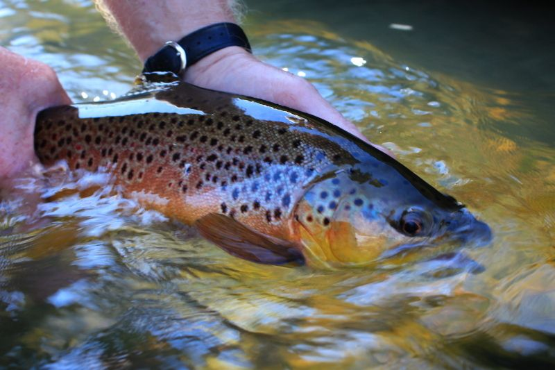 The Ozark Fly Fisher Journal | If I'm not going to catch anything