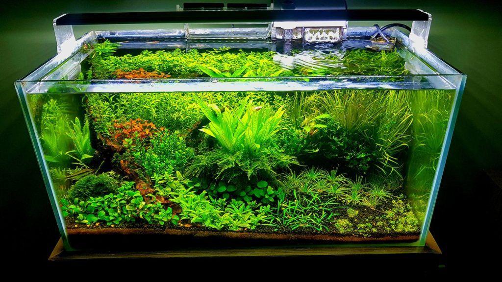 Aquascaping for Beginners: Step-by-Step Guide | Aquarium ...