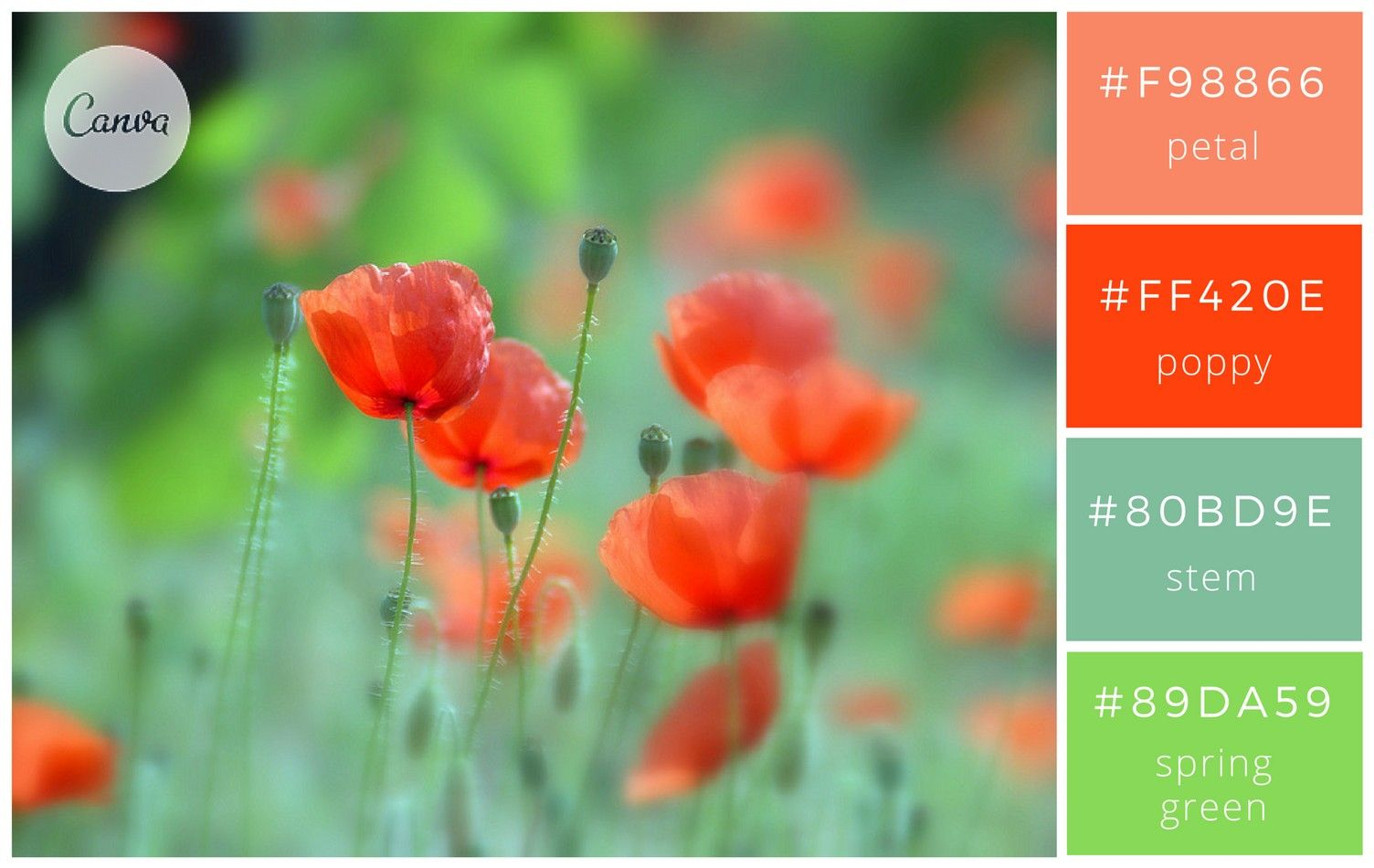 Colour scheme palette with chart with 4 colours. Greens ...