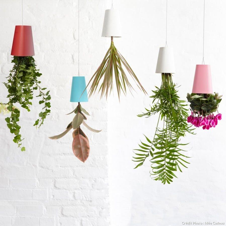 Épinglé sur Plantes d'intérieur