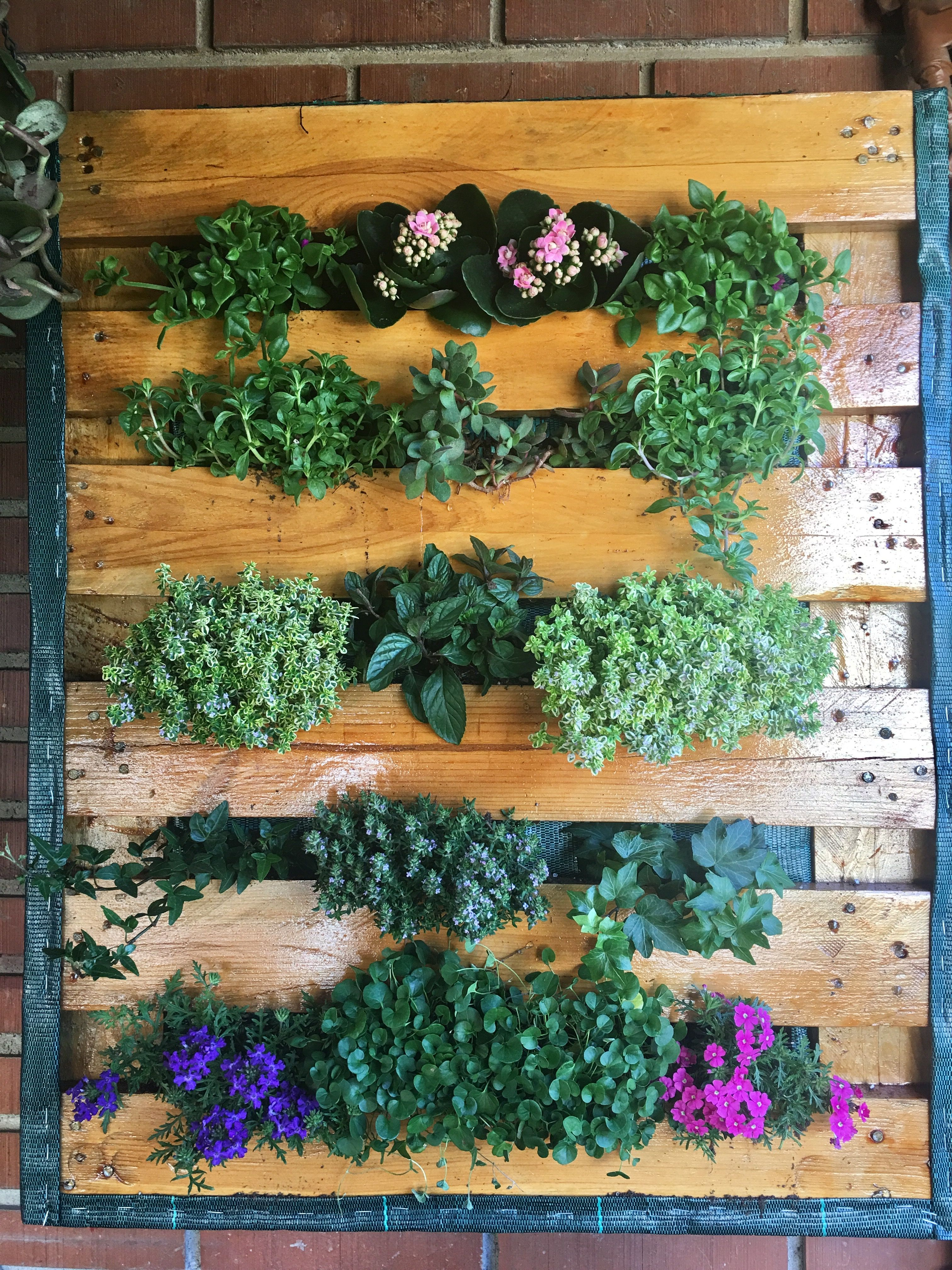 Mi versión de jardín vertical con palet.