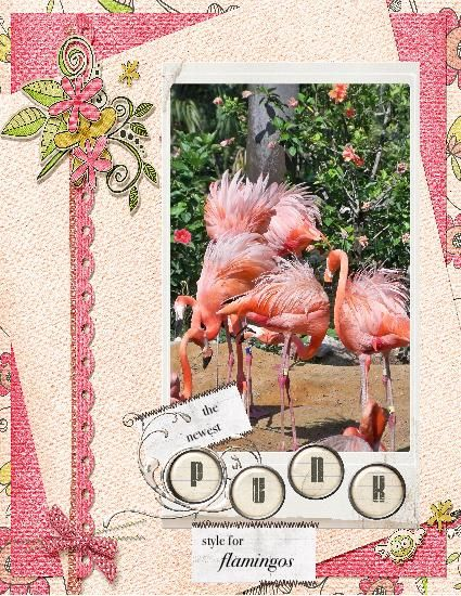 Flamingos Busch Gardens Fl Scrapbooking Layouts Busch Gardens Crafts