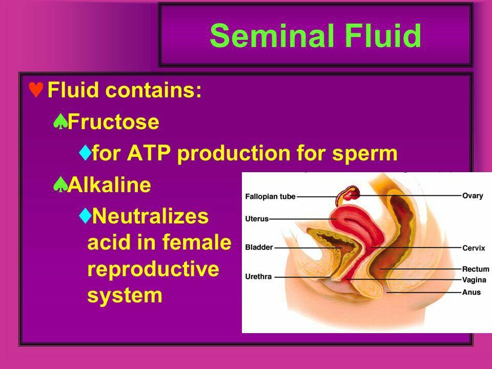 60-70% of seimen#..seminal vesicle mucosa is NON CILIATED ...