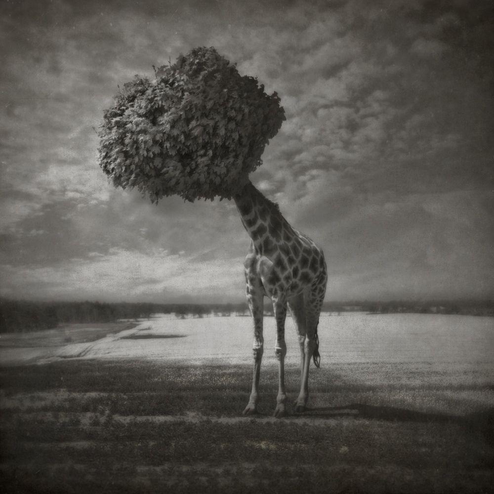 Dariusz Klimczak : Art around the world in http://www.maslindo.com