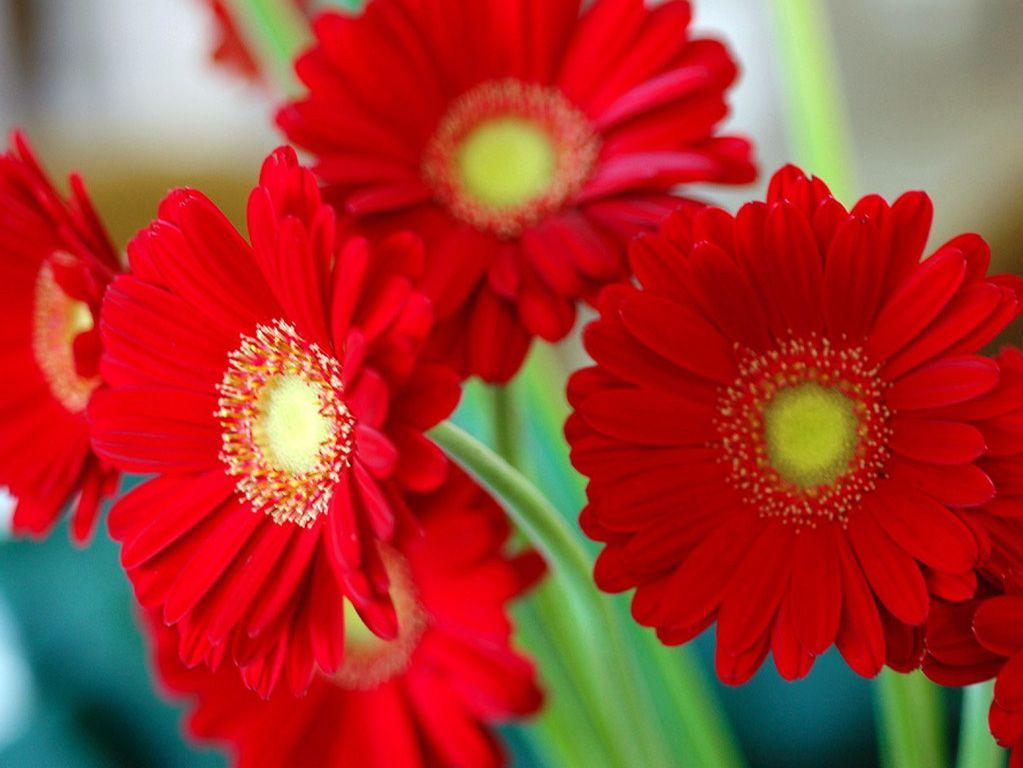 Red Flower We Need Fun