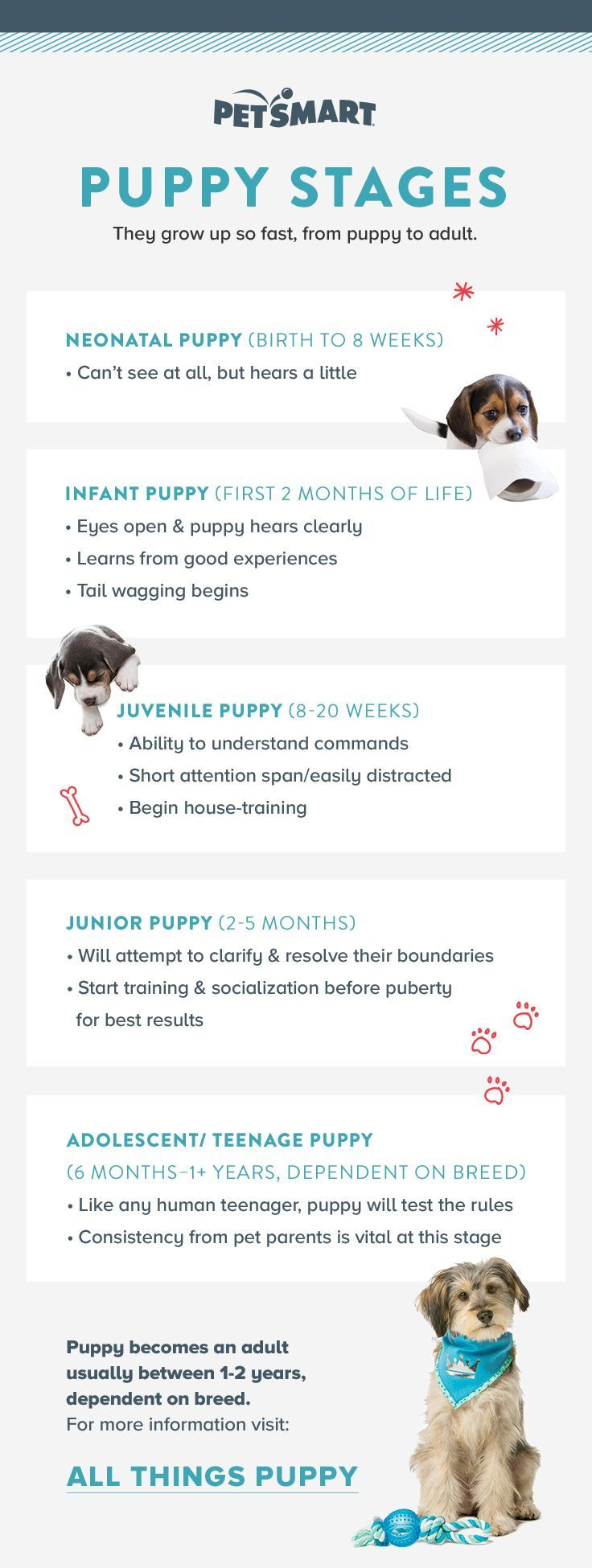Did you know there are so many stages in your puppy's