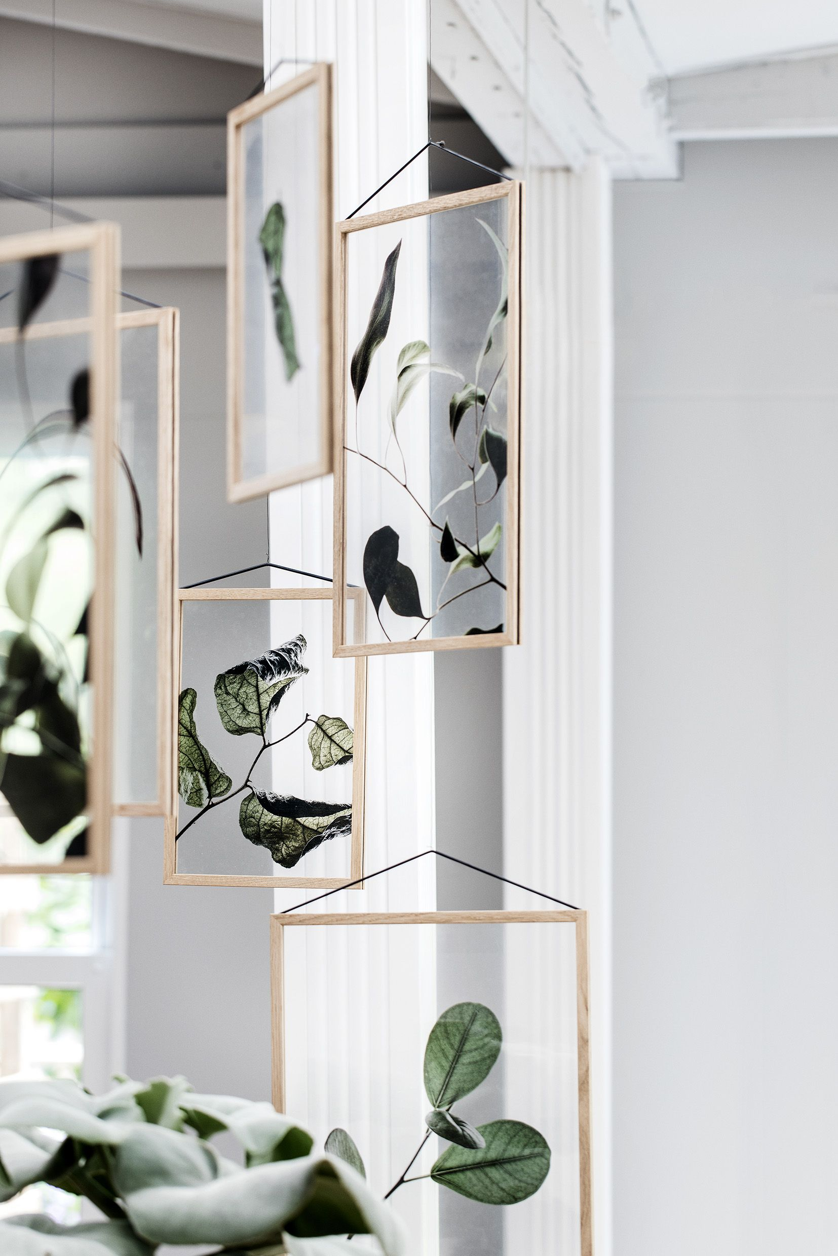 Floating transparent leaf prints prints leaves and interiors
