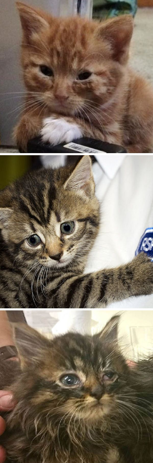 Rspca Completely Overrun With Abandoned Cats And Kittens Left For Dead By Owners Cats And Kittens Cats Pets