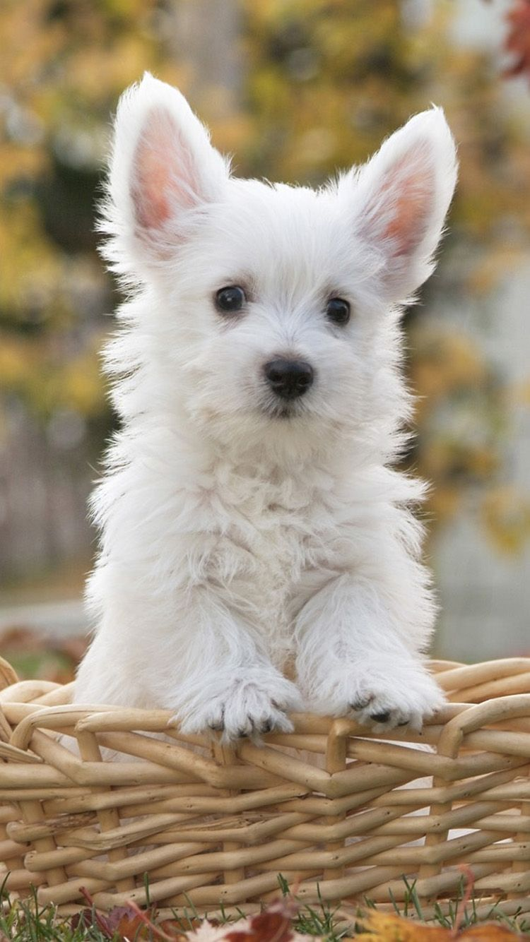 60 Cute Animals Iphone Wallpapers You Would Love To Download In 2020 Cute White Dogs Cute Dog Wallpaper Really Cute Dogs