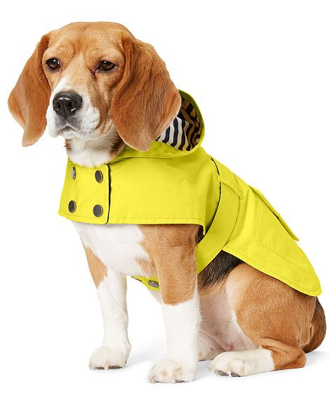 Hooded Dog Raincoat Ralph Lauren Pet Apparel Ralphlauren Com