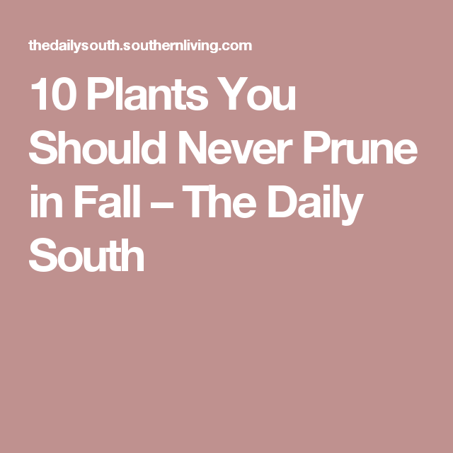 10 Plants You Should Never Prune in Fall – The Daily South