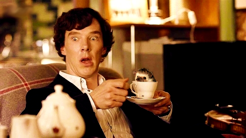 """There is a hedgehog...in his tea cup. o.o"" - :D :o)"