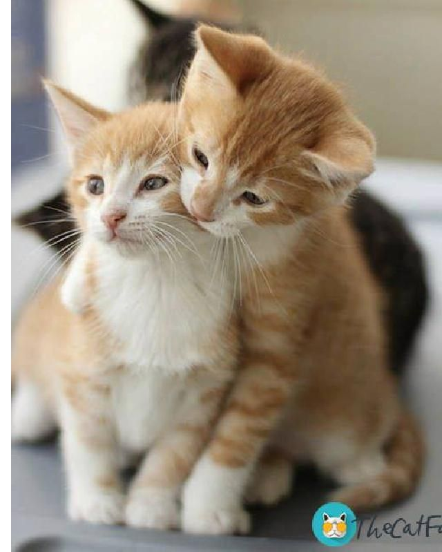 Lovely Following Us For Daily Fun Visit Thecatfan Com For Cutest Cat Themed Merchandise Ships Worldwide Kitty Cute Cats Cute Cats Photos Beautiful Cats