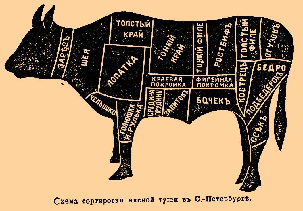 коровы в картинках схема любыми