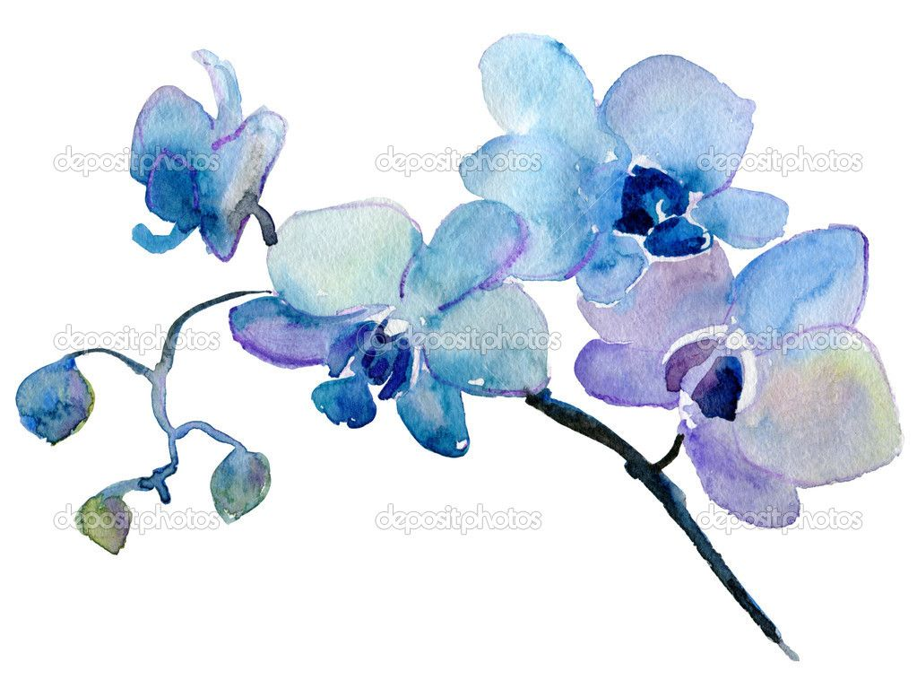 Orchid Watercolor Painting Blue Orchid Tattoo Watercolor Orchid Tattoo Floral Watercolor