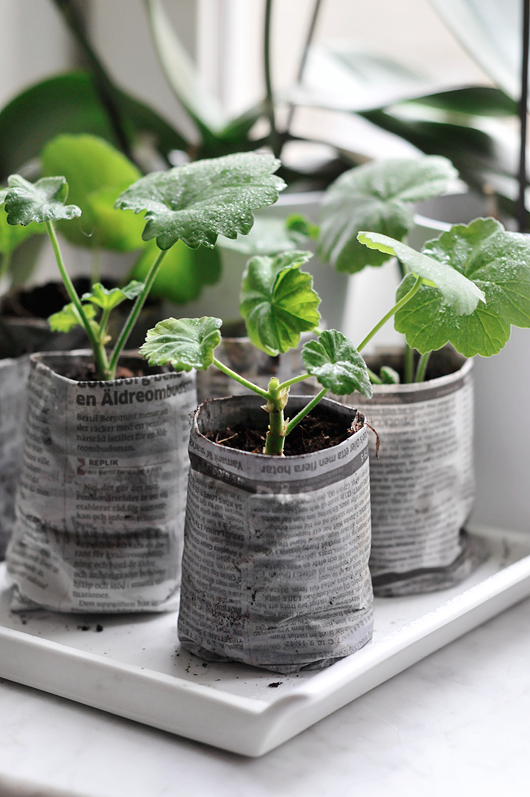 newspaper seed starter pots