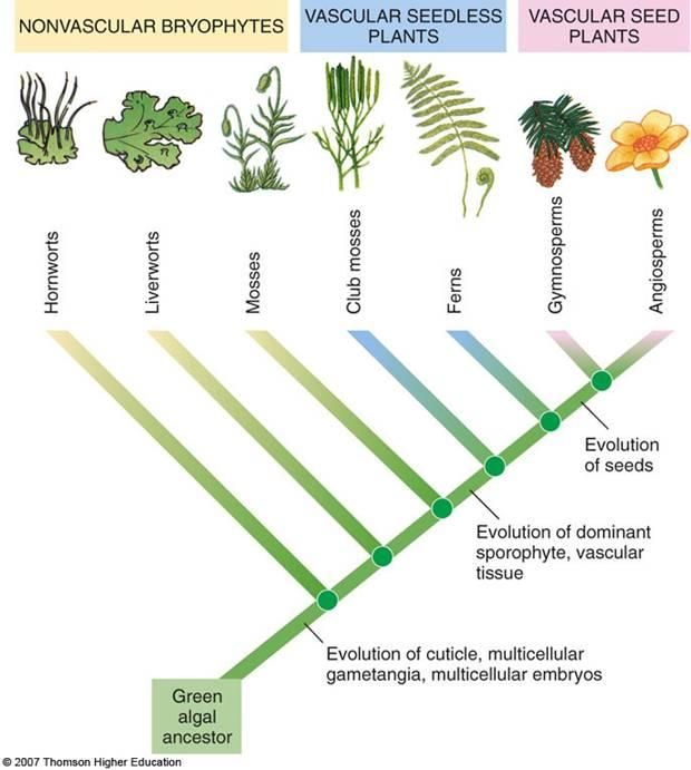 Image result for plant evolution