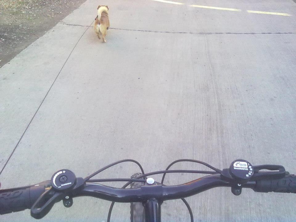 Paseando en bici con la compañía de mi perro