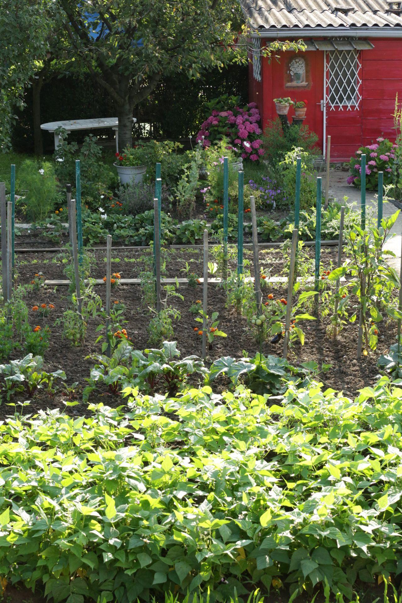 le potager gourmand botanic le potager gourmand pinterest potager jardinage potager et. Black Bedroom Furniture Sets. Home Design Ideas