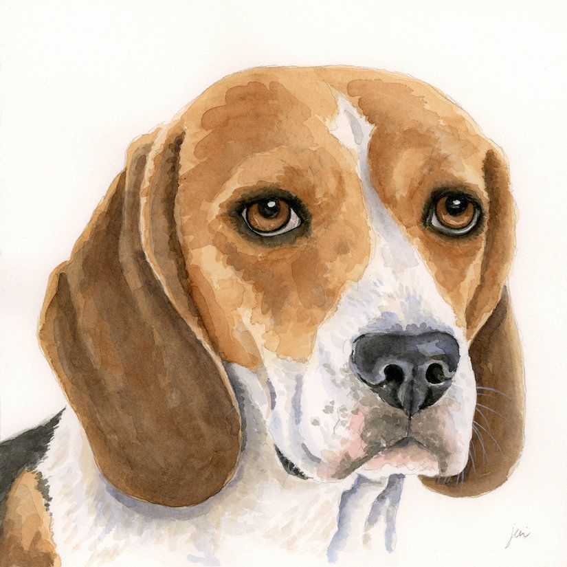 Beagle Art Print Dog Portrait Print From Original Watercolor