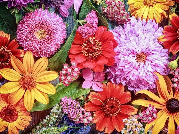 Essex County Council Spring plants, Plant sale, Fairy