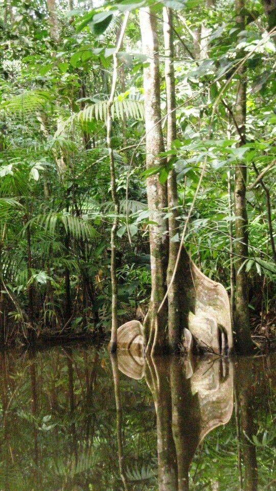 Guyane Sur La Comte Paysage Guyane Photographie De Paysages Foret Amazonienne