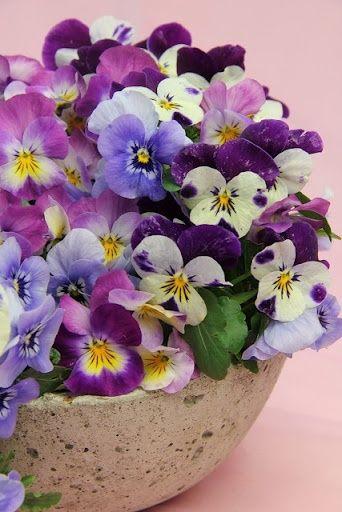 Pensamientos Amor Flores Jardín