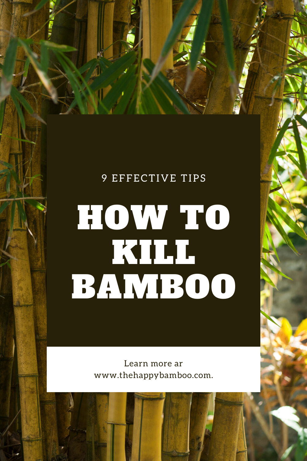 How To Get Rid Of Bamboo In My Garden