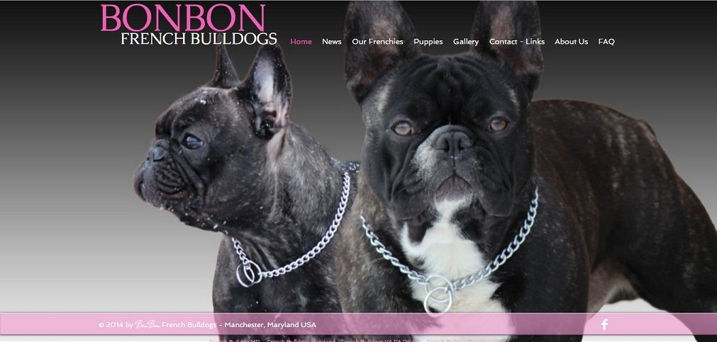 Breeder Of World Class French Bulldog Puppies In Maryland French