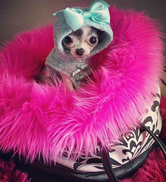 """These 10 Pictures of Pawty Time Pup Fashionistas are guaranteed to make you go """"Aww, that is so freaking cute""""."""