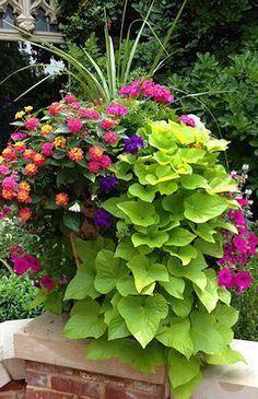 Beautiful Container Garden with spikes, pink geranium, lantana, violet and magenta petunias, and cascading sweet potato vine.
