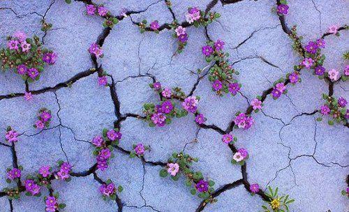 Imagem de flowers, purple, and nature