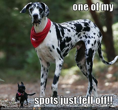 One Of My Spots Just Fell Off Funny Dog Photos Funny Animals Funny Dog Pictures