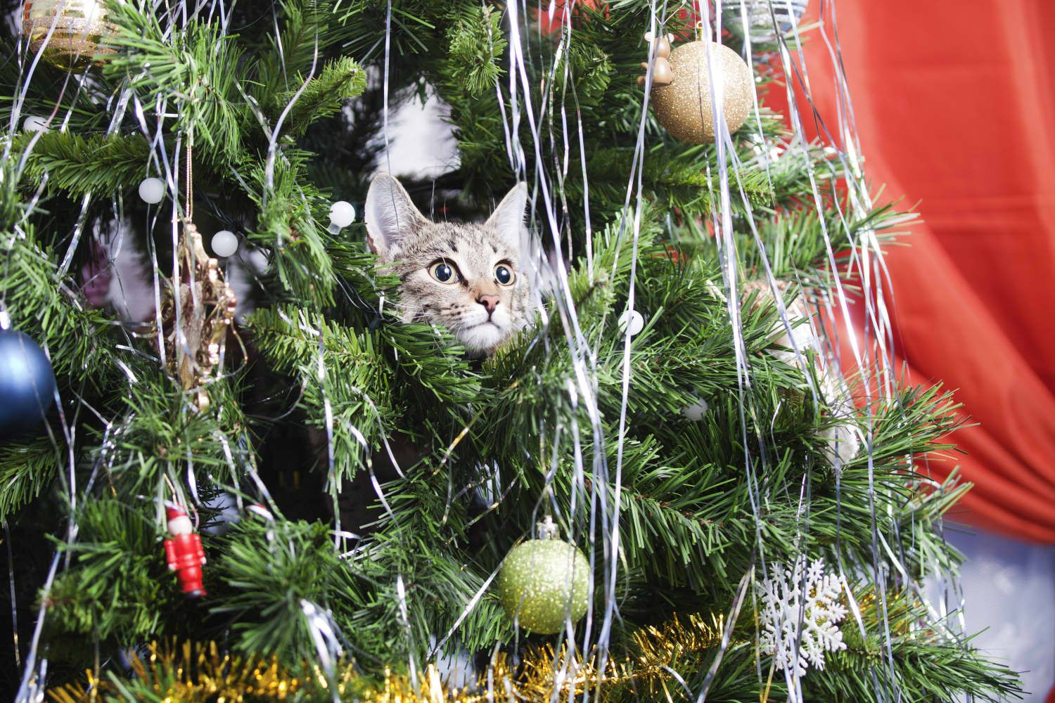 Apparently, Cats Love Climbing in Christmas Trees, and ...