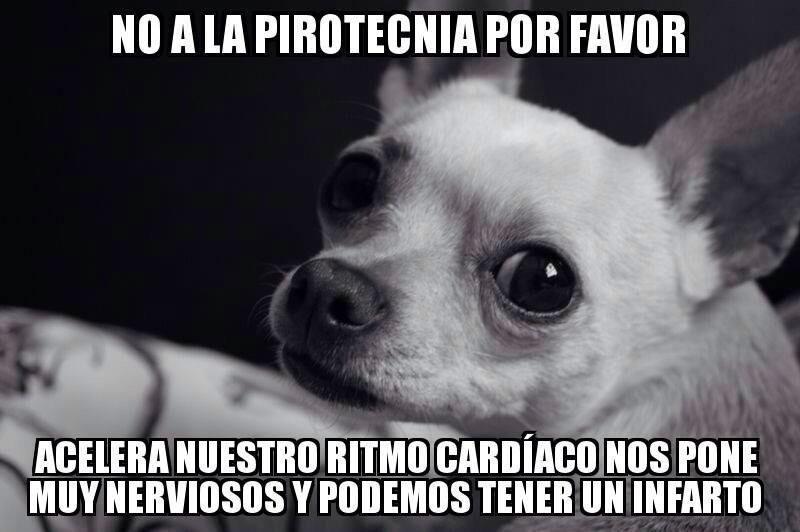 Pin On Mi Perro Y Yo