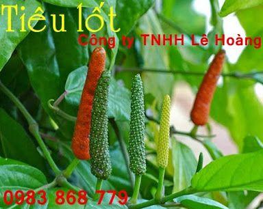 http://tieulot.blogspot.com/ - Google+