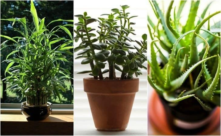 22 Practically Immortal Houseplants That Even You Can't Kill -   17 planting Indoor desk ideas